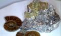 キラキラ-アパタイト原石2000とアンモナイト200-20141013-01