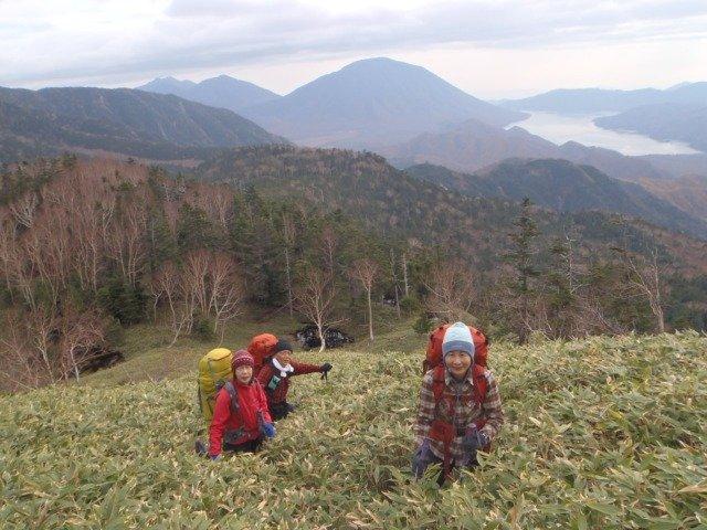 11岳樺と笹原のコントラストがきれい