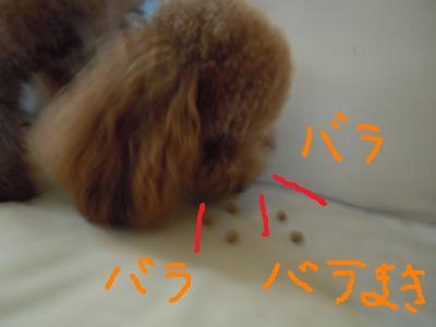 DSCN1536_convert_20130816205618.jpg