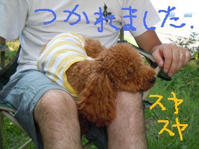 DSCN1597_convert_20130811204556.jpg
