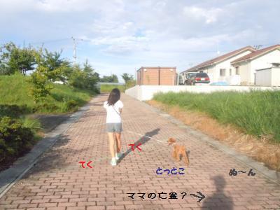 DSCN2213_convert_20130904212441.jpg