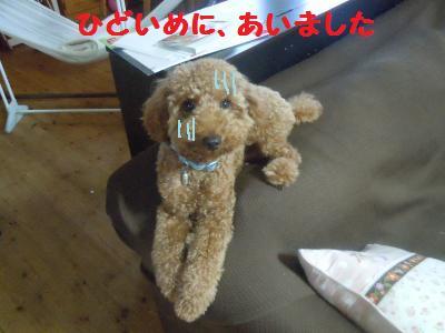 DSCN2420_convert_20130917213305.jpg