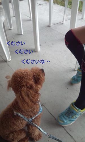 DSC_0686_convert_20131003213715.jpg