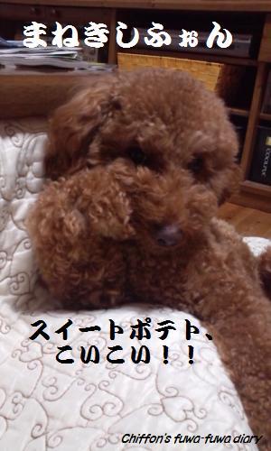 DSC_0842_convert_20131110220225.jpg