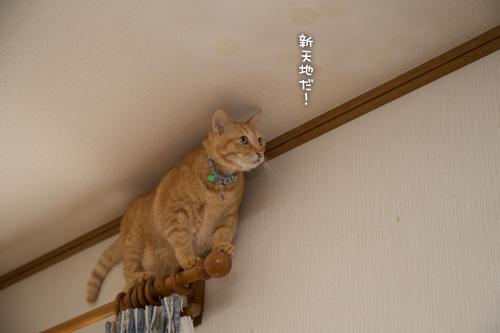 俺様カックイイ(`・ω・´)