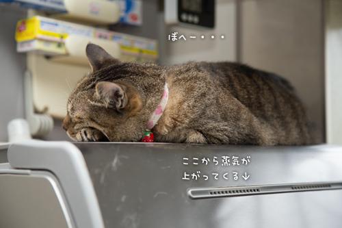 食洗機ラブ