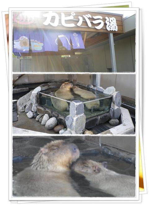石川動物園12