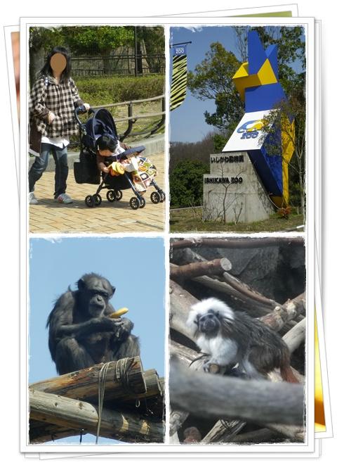 石川動物園10