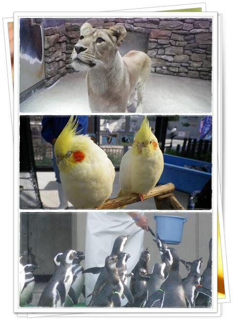 石川動物園11