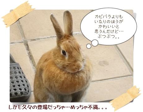 いなり怒14