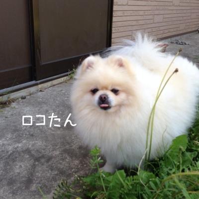 fc2blog_20130524184446eb2.jpg