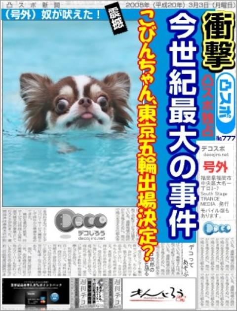 スポーツ新聞こびんちゃん2