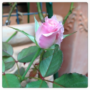fc2blog_201309241526597e8.jpg