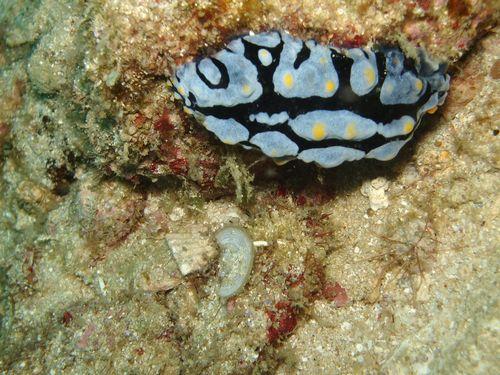 沖縄那覇市港ウミウシ観察ツアー。ダイバーに人気の撮影スポット案内人がいるショップ