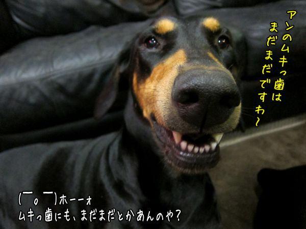 sidoumukiha1.jpg