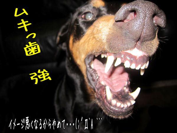 sidoumukiha4.jpg