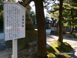 戊辰の松 白山神社(新潟市)