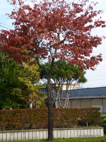 沼田公園2013秋