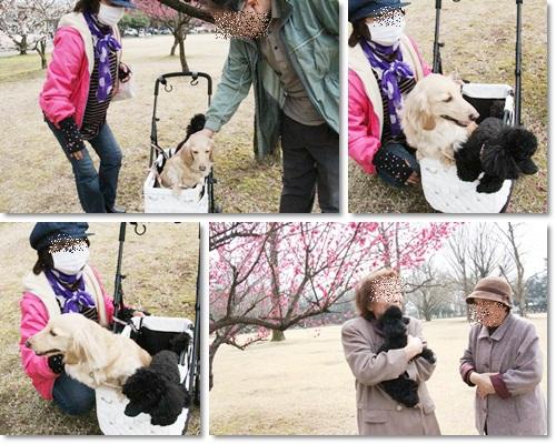 cats_20130326182658.jpg