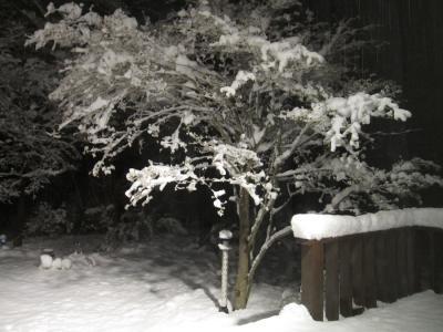 4月の雪1