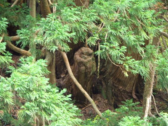 ふくろうの木