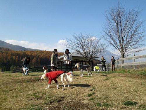 晴天とわんこと林檎狩り8