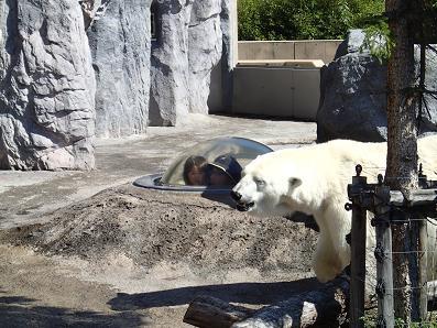 白熊に合う
