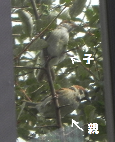 2013062402.png