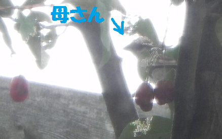 2013062410.png