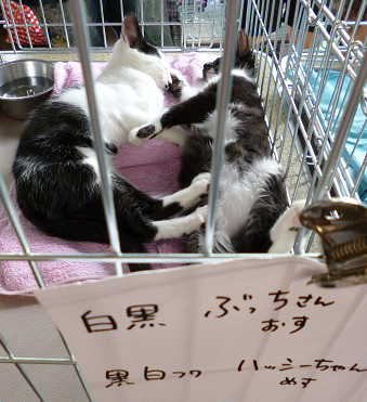 2013071402.png