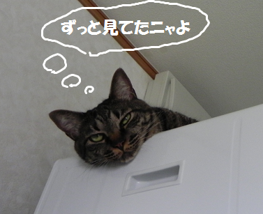 2013082004.png
