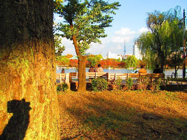 1117shinobazu15.jpg