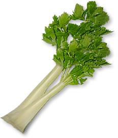 酵素が多く含まれる食べ物 セロリ