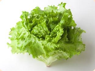 酵素が多く含まれる食べ物 レタス