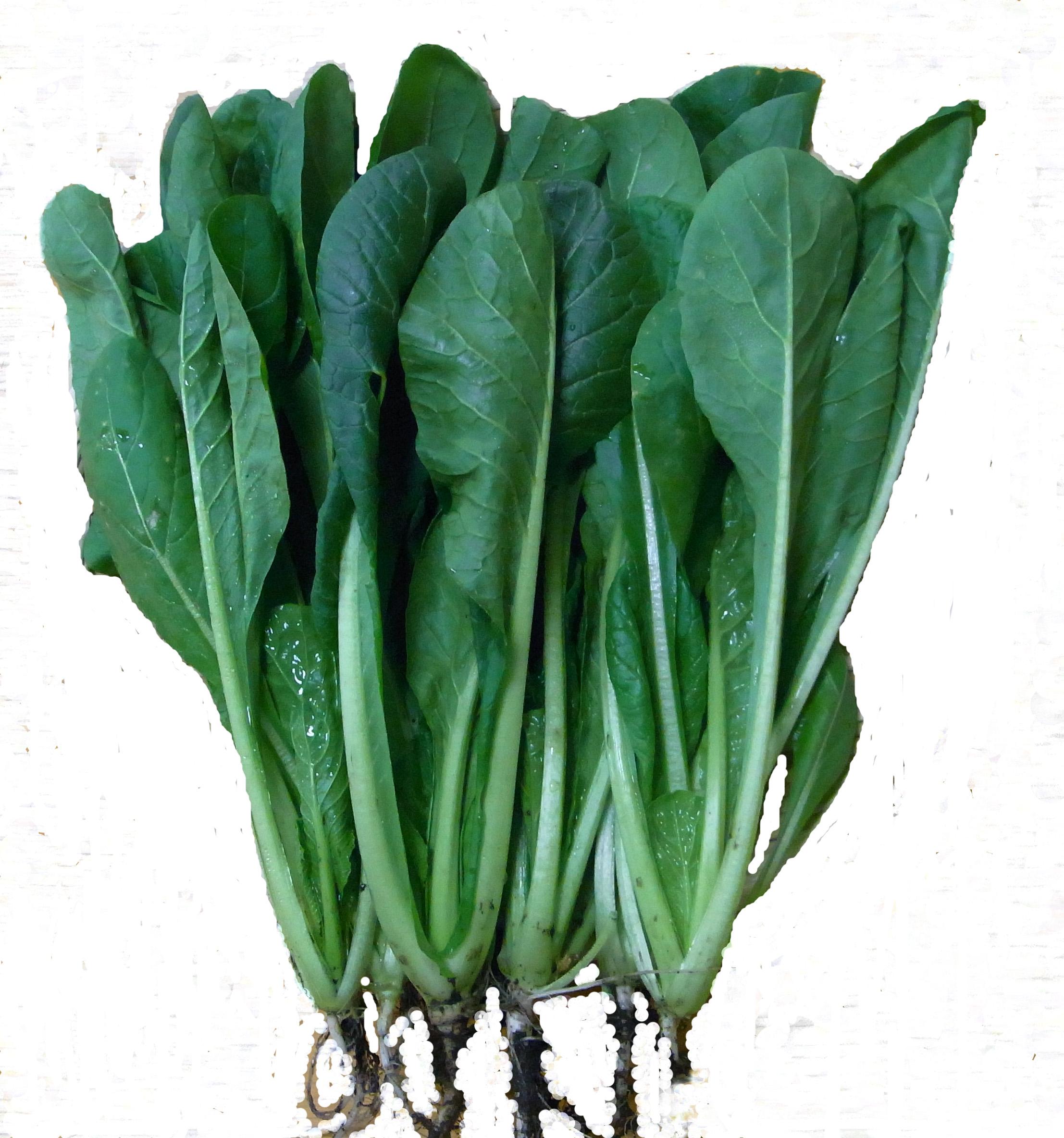 ドライフード 青菜