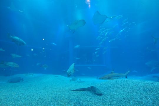 20130923_osaka_aquarium_kaiyukan-05.jpg