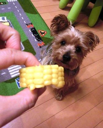 corn_20131111234201ee8.jpg