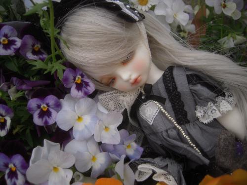 姫紫苑ちゃん 1