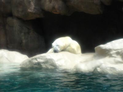 2013/7/18日本平動物園:ダレてるロッシー