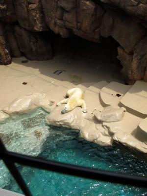 2013/7/18日本平動物園:ダラけてるロッシー、上から