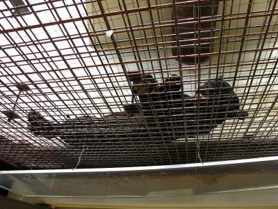2013/7/18日本平動物園:黒いジャガー