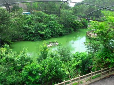 2013/7/18日本平動物園:猛獣館299の4階テラスから見るフライングメガドーム
