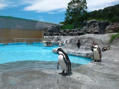 2013/7/18日本平動物園:ペンギン
