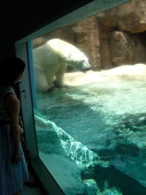 2013/7/18日本平動物園:ロッシーふたたび