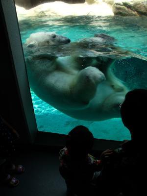2013/7/18日本平動物園:泳ぐロッシー1
