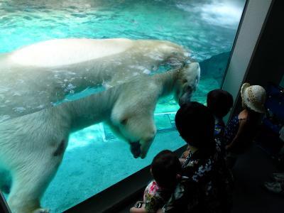 2013/7/18日本平動物園:泳ぐロッシー2