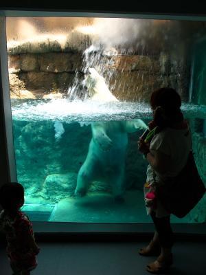 2013/7/18日本平動物園:水中で立ち上がるロッシー