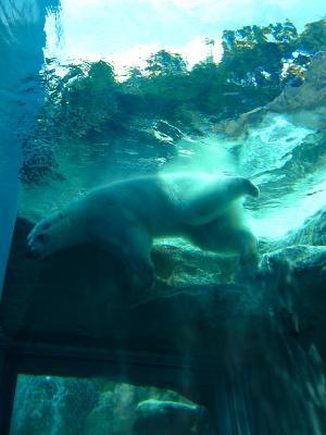 2013/7/18日本平動物園:バニラたん