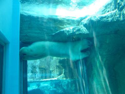 2013/7/18日本平動物園:バニラたん2