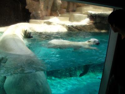 2013/7/18日本平動物園:ロッシーとバニラ
